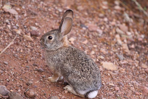 cose che non sai sui conigli