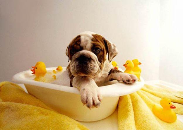 consigli su come lavare il cane