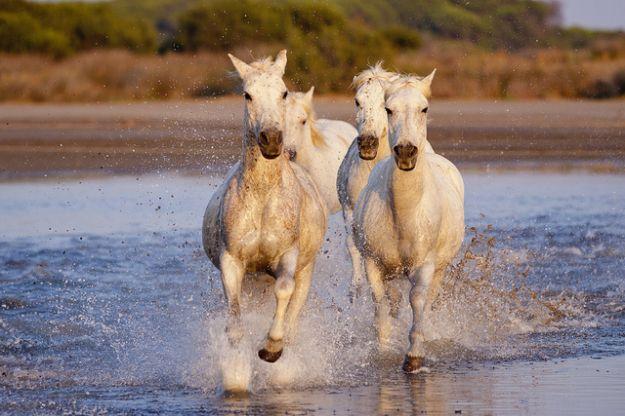 curiosità cavalli