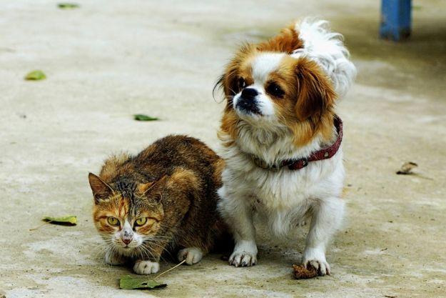 dove seppellire un cane o un gatto consigli info