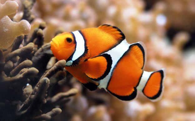 animale marino test