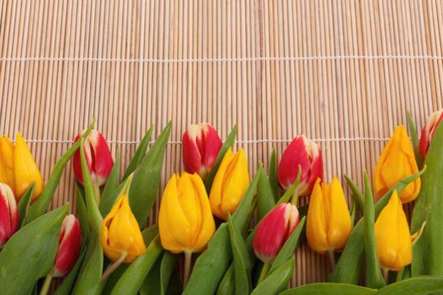 come curare i tulipani in vaso