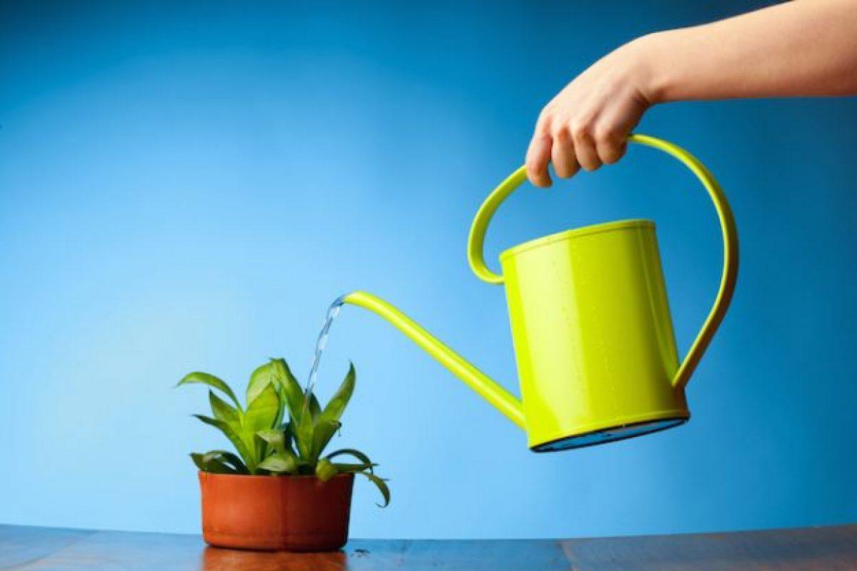 Come Curare Le Piante come curare le piante: 10 consigli da non perdere - ecoo.it