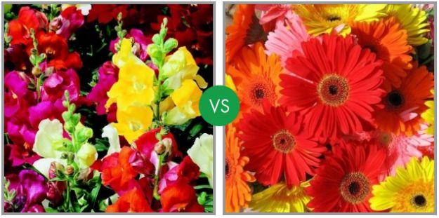 sfida fiori