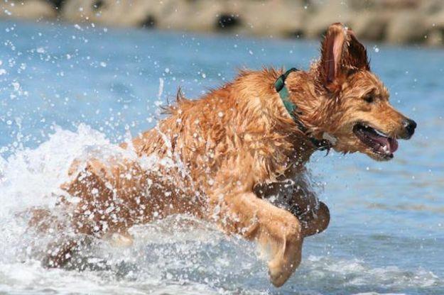 spiagge per cani 2015