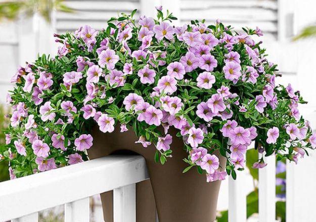 pianta da balcone