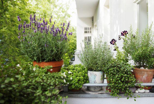 piante-balcone-soleggiato