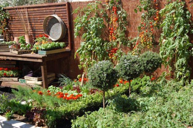 rimedi naturali contro gli insetti dell orto