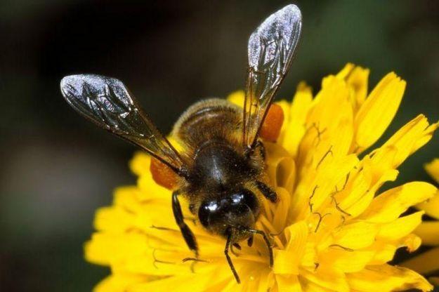 allontanare-le-api