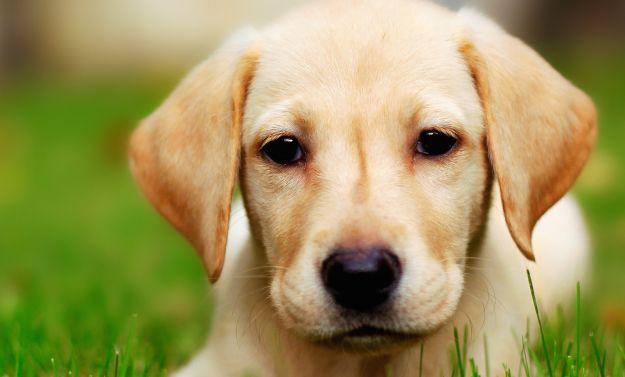 come eliminare odore cane casa rimedi naturali