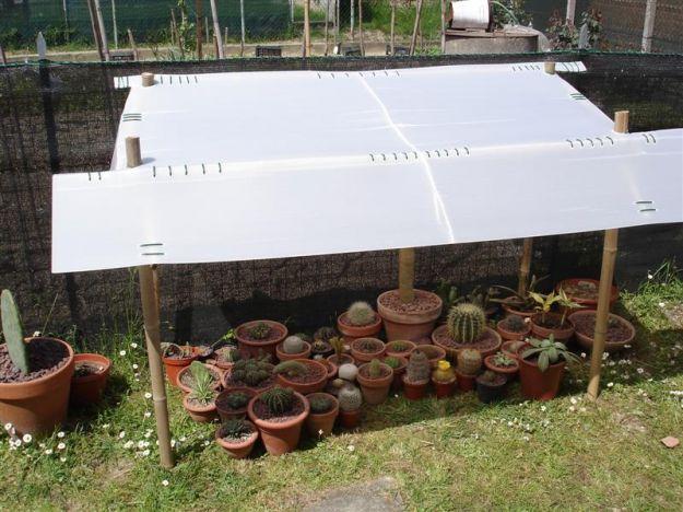 proteggere piante dal sole