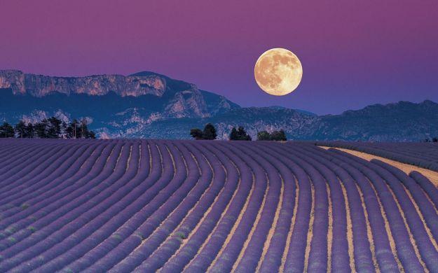 coltivare secondo la luna