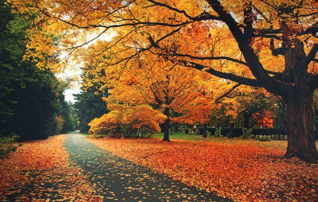 motivi per amare l autunno