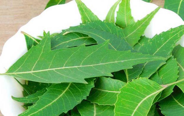 olio di neem usi proprieta