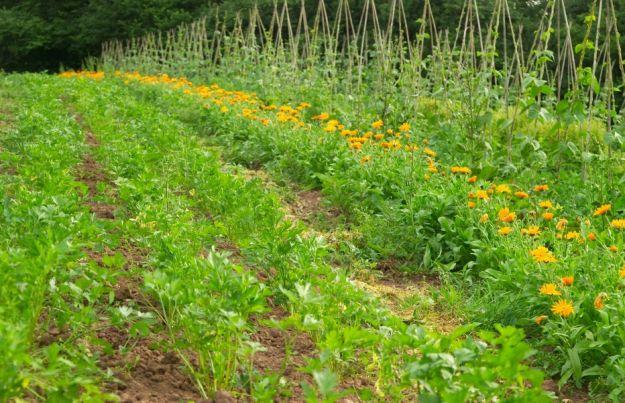 giardino biodinamico