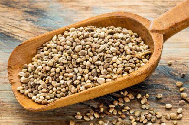 semi di canapa proprieta ricette
