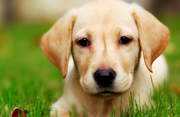 come proteggere i cani dal freddo in inverno