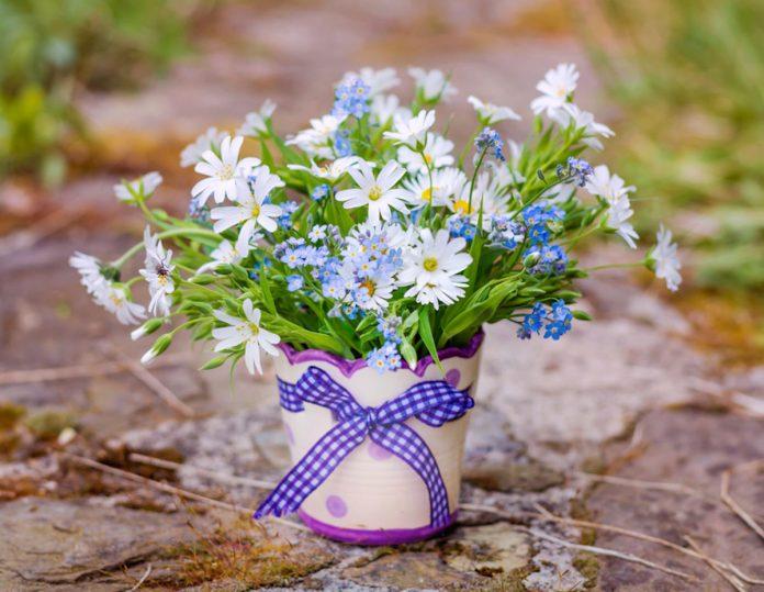 Margherita in vaso