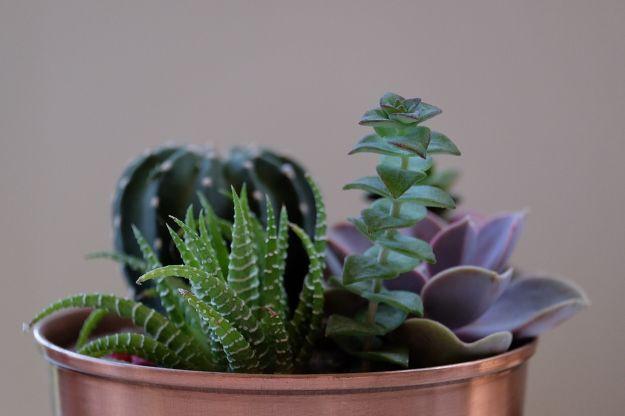 migliori piante grasse per il giardino