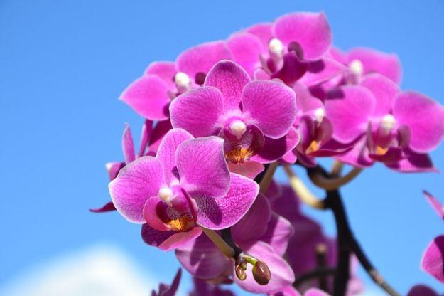 messa a dimora orchidee