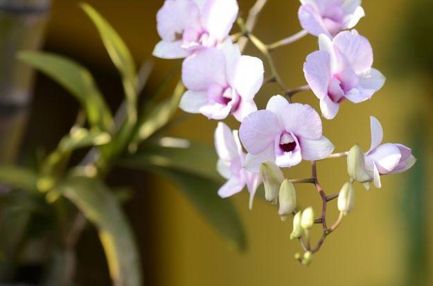 vaso orchidee