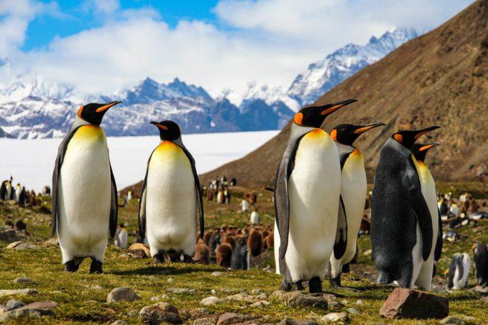 Cambiamenti climatici in Antartide