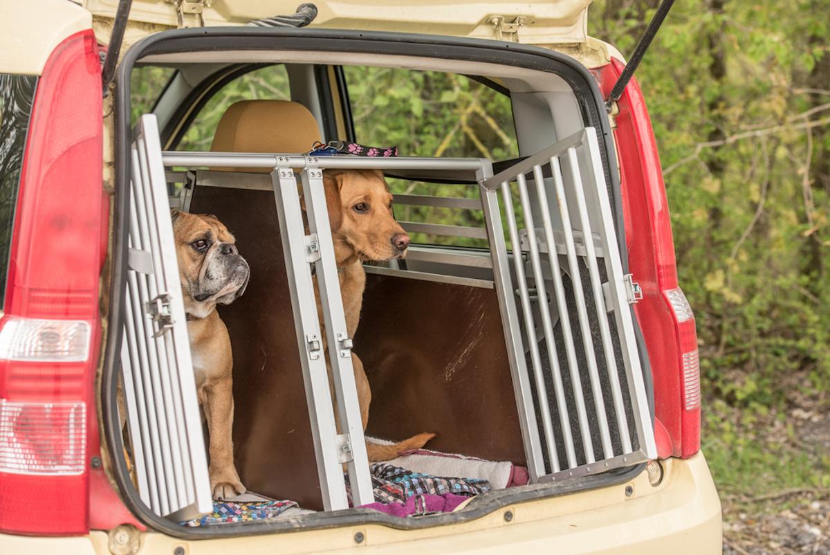 Trasportino per cani taglia media