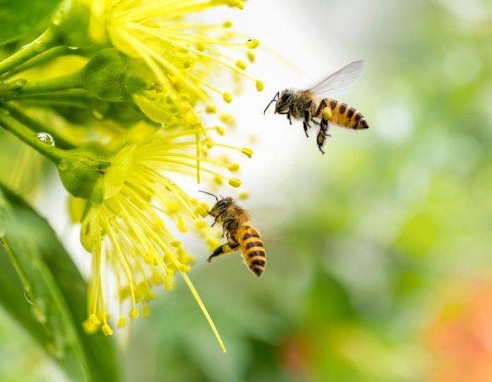 Emergenza api