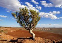 Desertificazione Cina