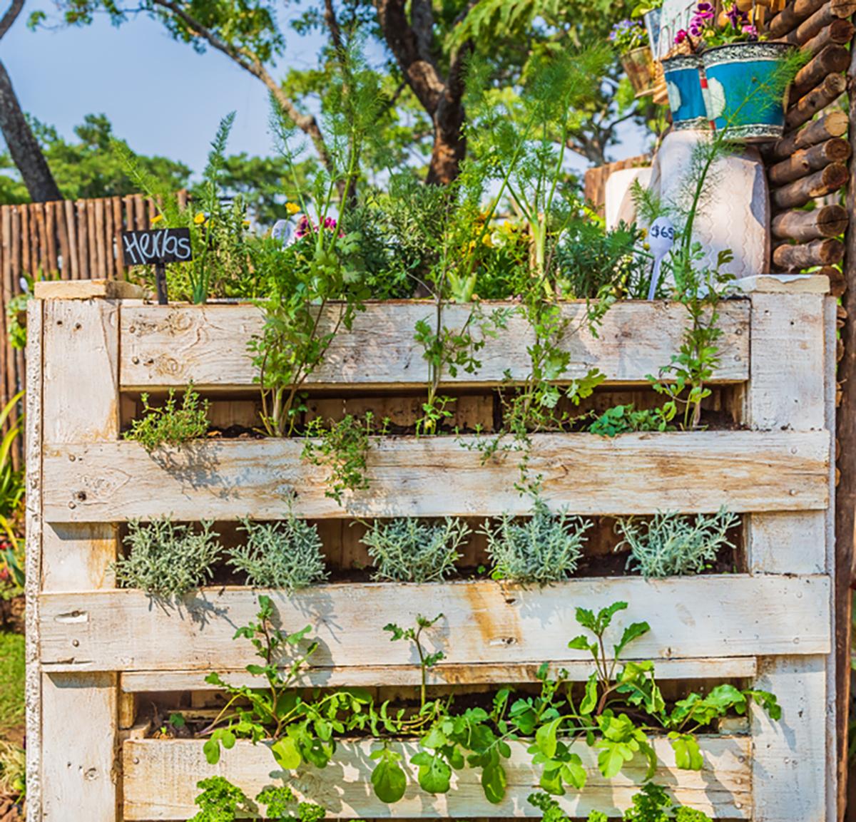 Giardini Verticali Fai Da Te orto verticale: realizzarlo con pallet, tubi in pvc e cosa