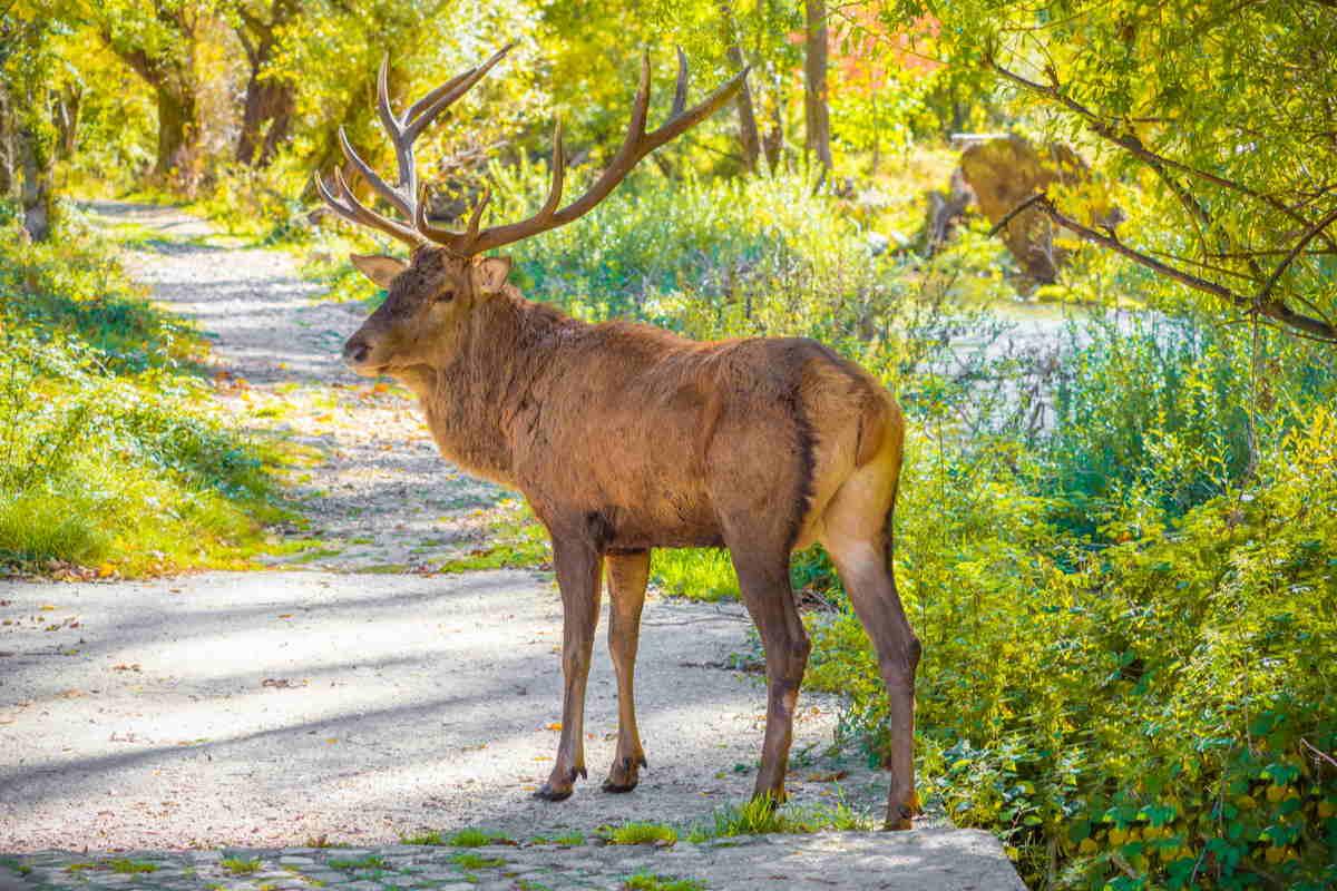 Cervo in una riserva naturale