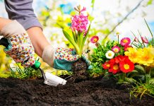 Come seminare fiori