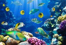 Un gruppo di pesci in acqua. Sempre più specie migrano verso i Poli