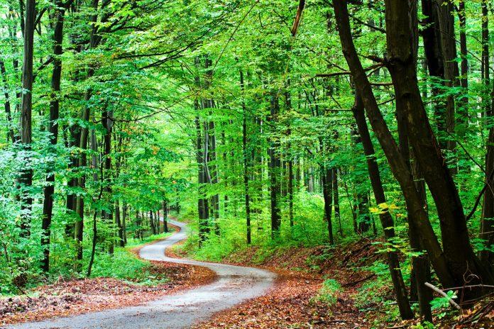 Sentiero dei Parchi italiani: il cammino di Santiago italiano