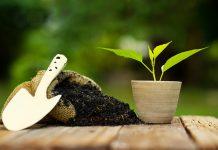 Come realizzare un fertilizzate naturale a casa con il fai da te