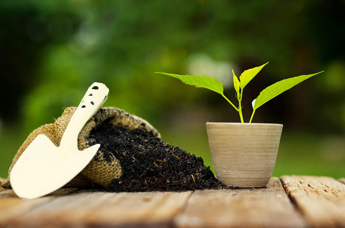 Fertilizzanti Naturali Come Realizzare Un Concime Fai Da Te Ecoo It