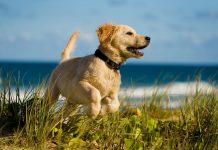 Spiagge italiane accessibili ai cani