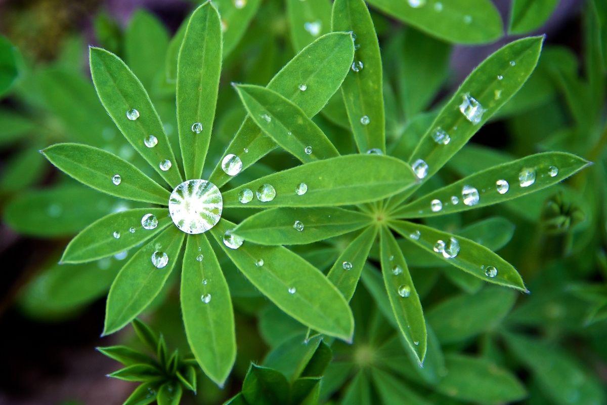 Pianta verde con diamanti