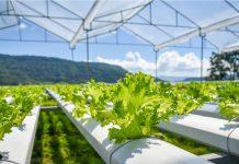 coltivazione piante idroponica