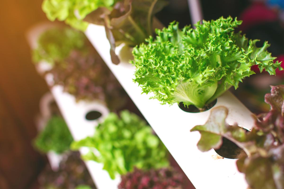 pianta idroponica su scaffale