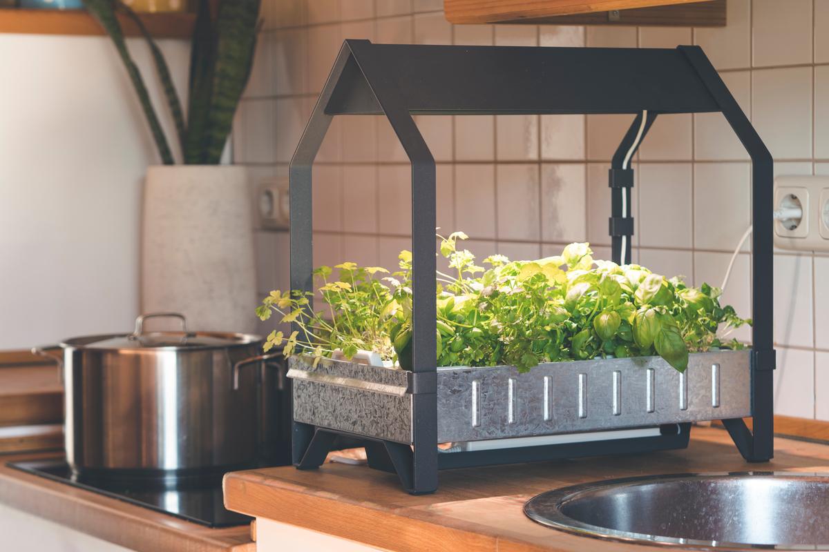 serra piante idroponica a casa