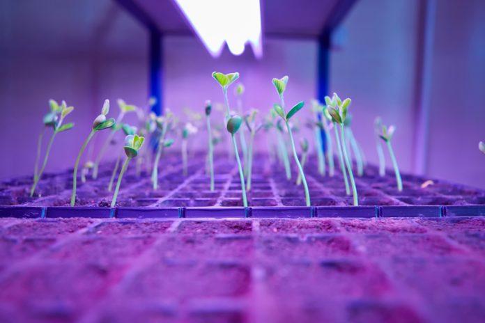 Piante germogliano dentro una grow box