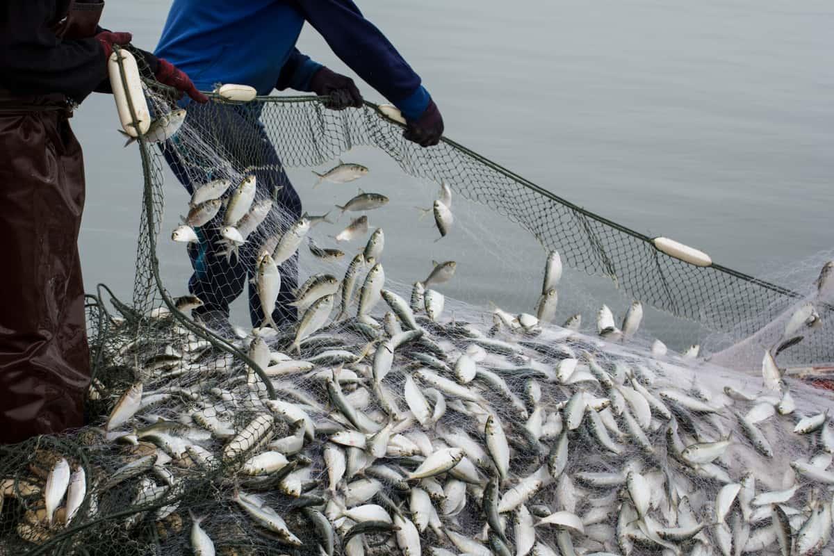 pesca sostenibile con rete
