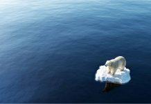 Orso polare su piccolo pezzo di ghiaccio in mezzo al mare