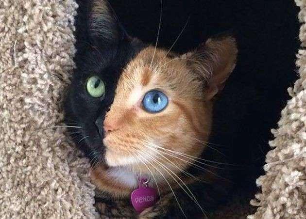Gattino con occhi particolari