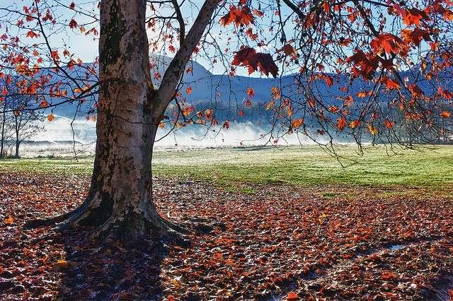 Albero dalle foglie rosse
