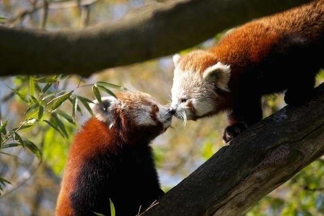 Animali che si baciano