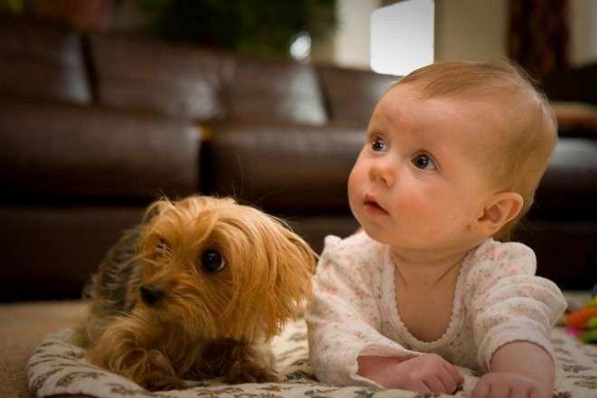 Bambini e cagnolini