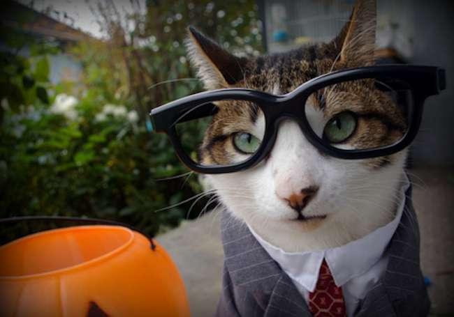 Costumi di Halloween dedicati ai gatti